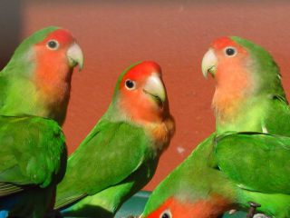 Vogelen (NTR radioprijs) thumbnail